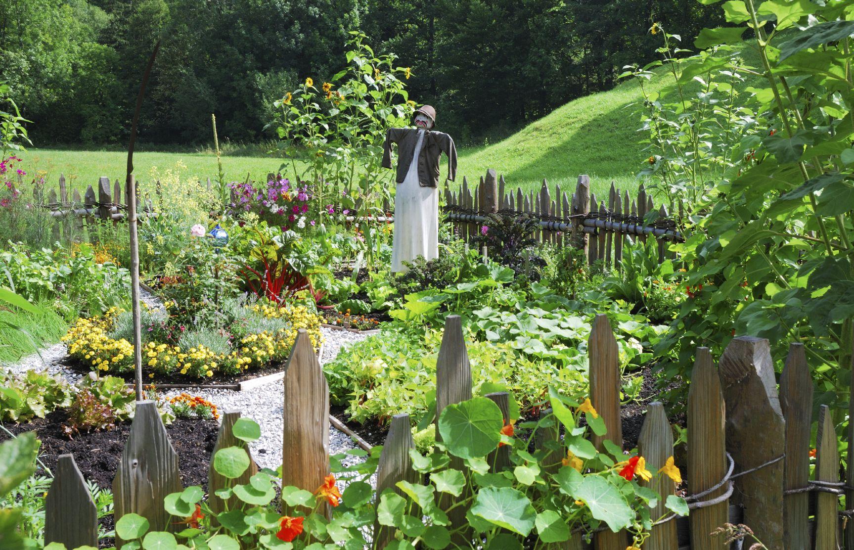 Beautiful Vegetable Garden Fence -