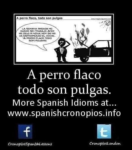 A Perro Flaco Todo Son Pulgas Spanish Idioms Idioms Memes