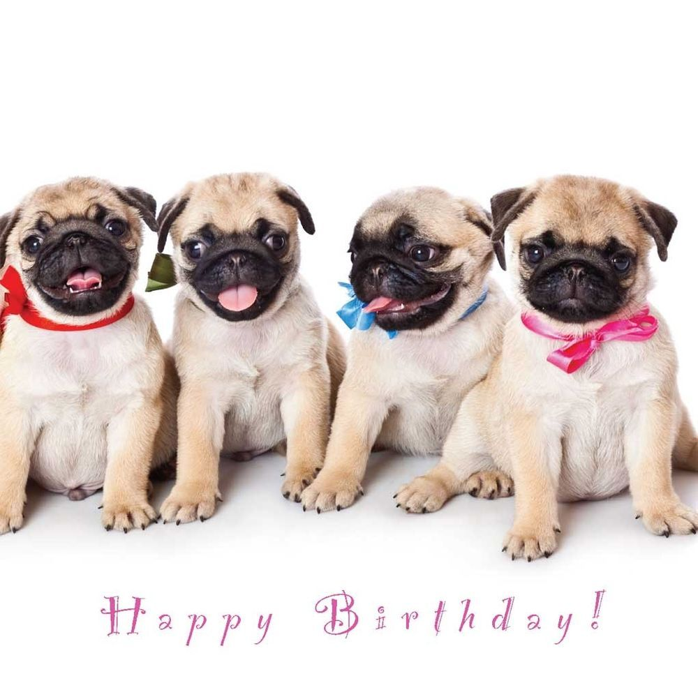 Happy birthday dogs background 1 hd wallpapers amagico happy birthday dogs background 1 hd wallpapers amagico kristyandbryce Choice Image