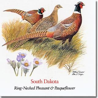 south dakota state bird and flower the ring necked pheasant and pasque flower