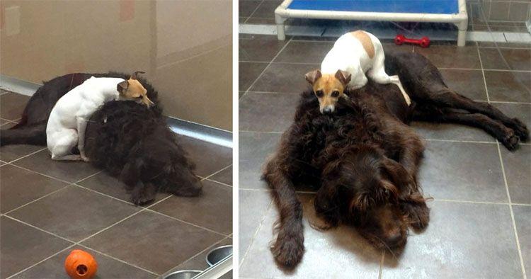 Estos perros fueron abandonados y no dejan de abrazarse el uno al otro en el refugio son inseparables #viral