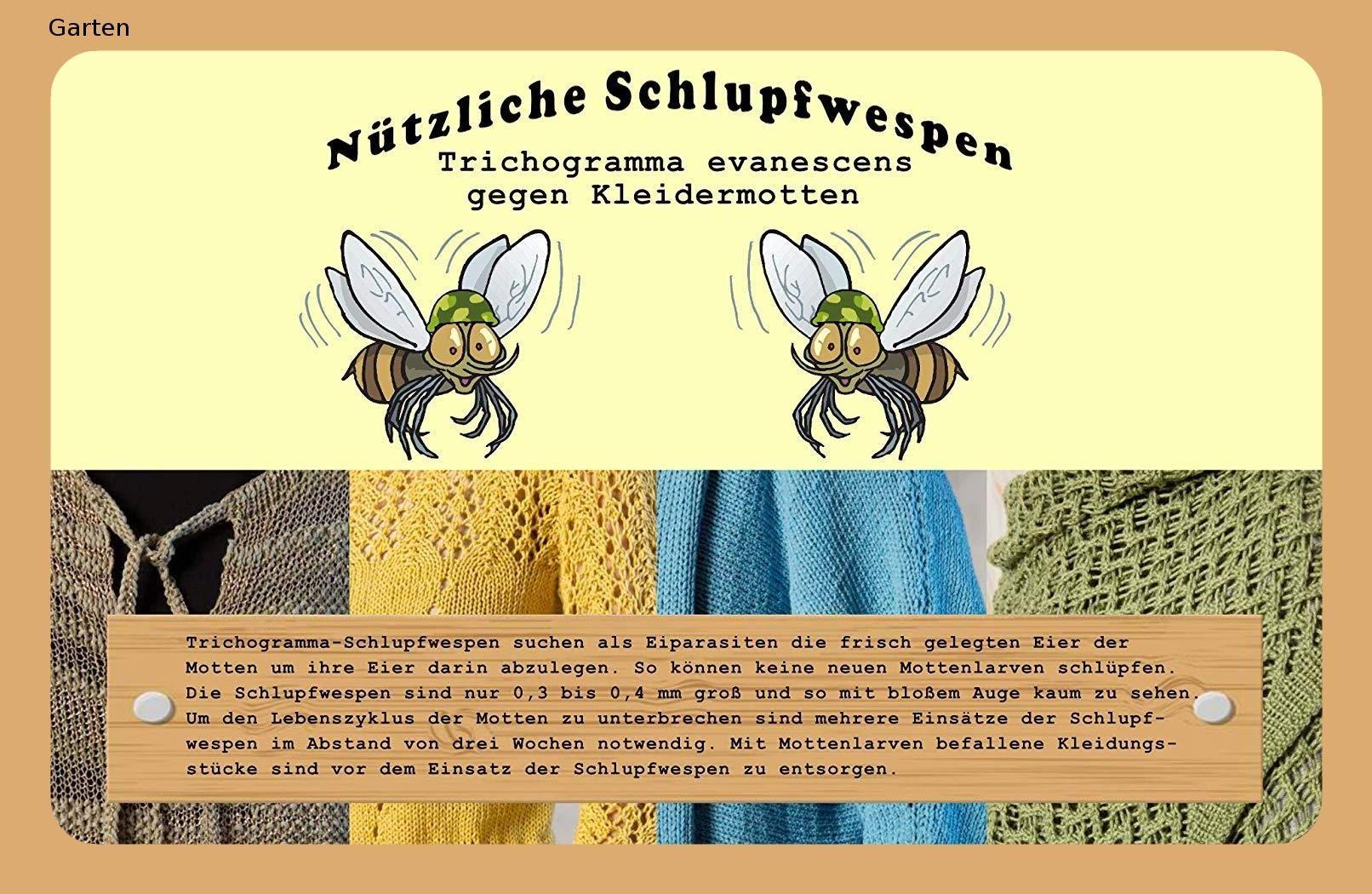 Vgo Schlupfwespen 5 Kartchen Mit Je 2000 Schlupfwespen Zur Bekampfung Von Kleidermotten Einzellieferung Schlupfwespen Wespe