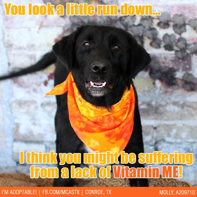 Vitamin Me Dr Dog Thinks Your Intake May Be Low Prescription