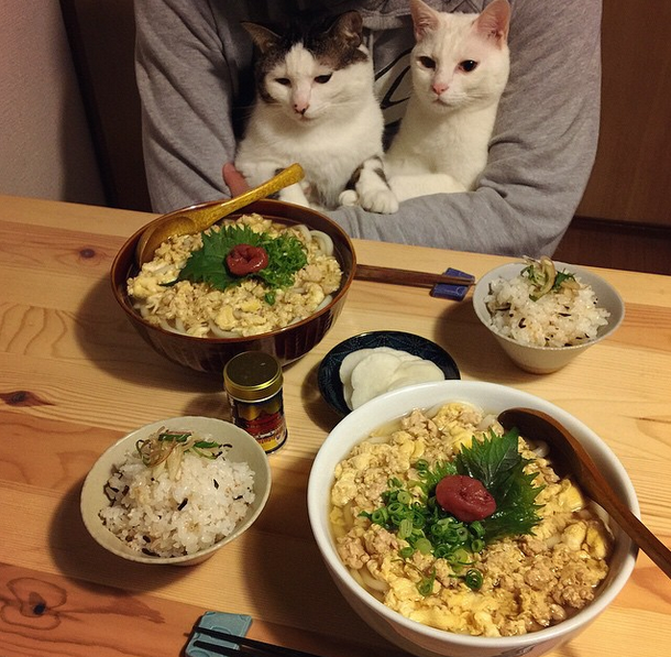 Naomiuno's cats,Japanese food...Actually,I don't know what they are thinking while their Dad and Mom dining,do you know?https://instagram.com/naomiuno/