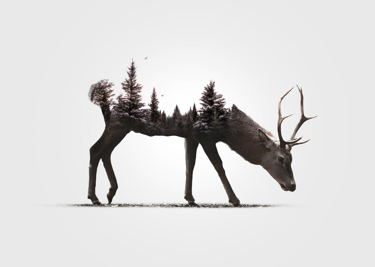 General 1553x1105 digital art animals simple background