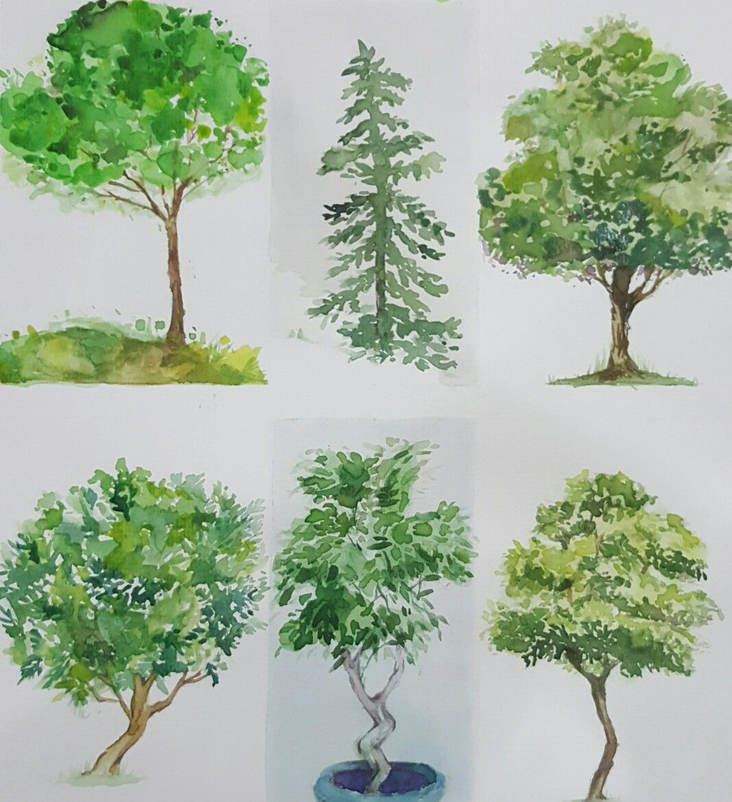 Watercolor Trees Elevations Foliage Watercolor Using Prang On