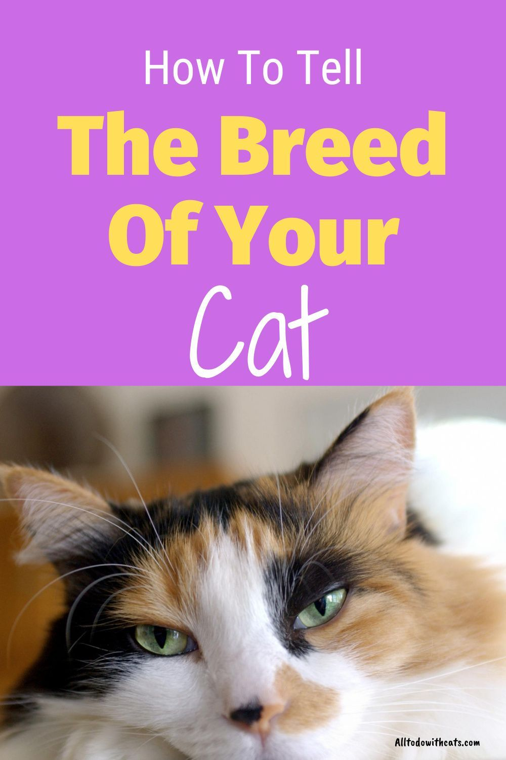 What Breed Is My Cat Find Out What Type Of Cat You Have In 2020 Short Hair Cat Breeds Types Of Cats Breeds Cat Breeds