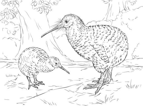 Great Spotted Kiwi Coloring Page Free Printable Coloring Pages Animal Coloring Pages Bird Coloring Pages Coloring Pages