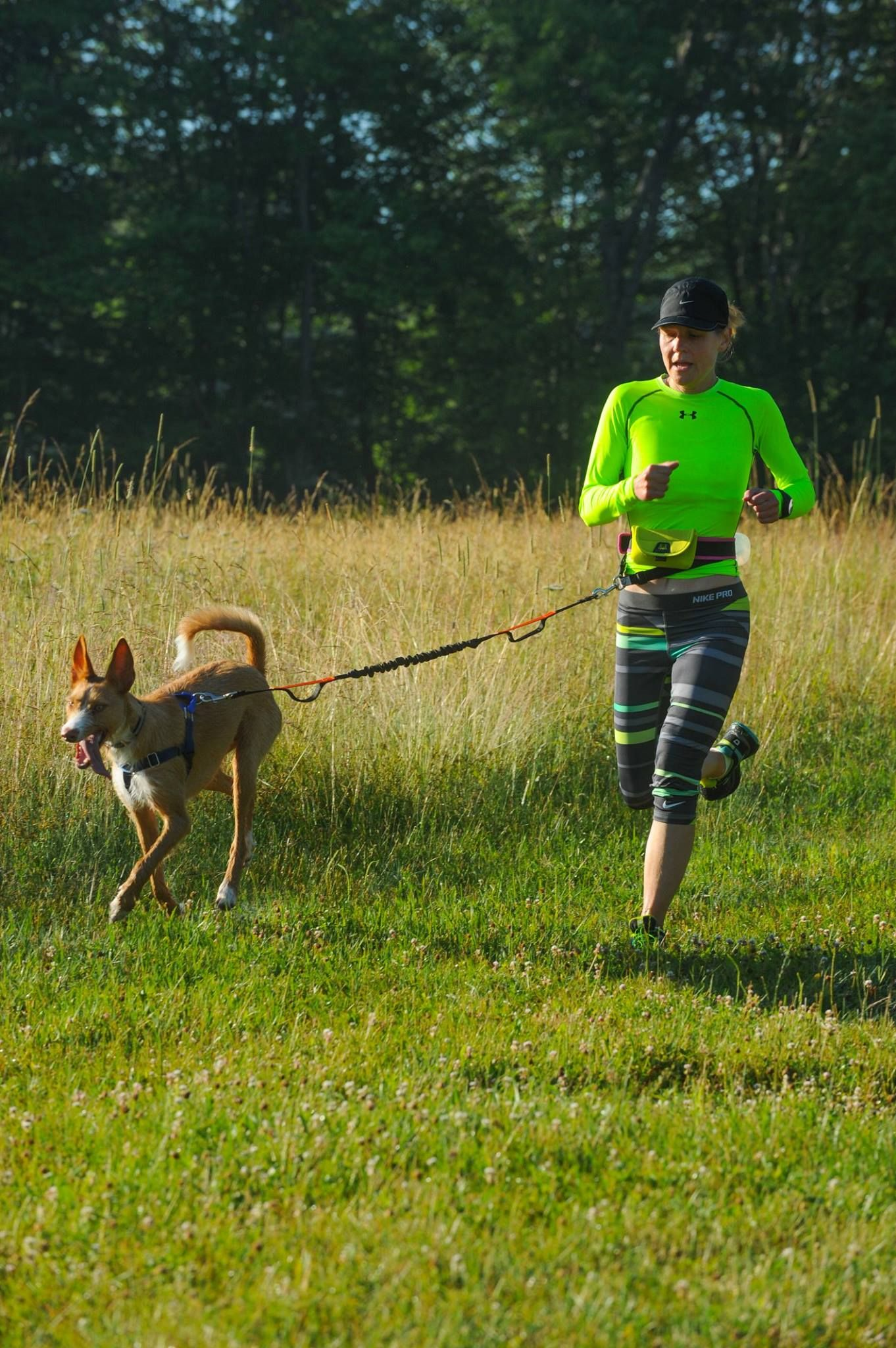 Iron Dog Roman competing in the muddy paws trail race ...