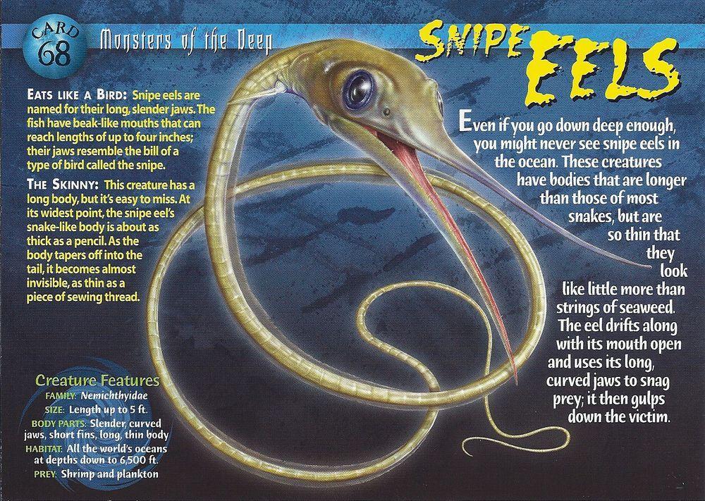Snipe Eel Wild creatures, Animal facts, Weird creatures
