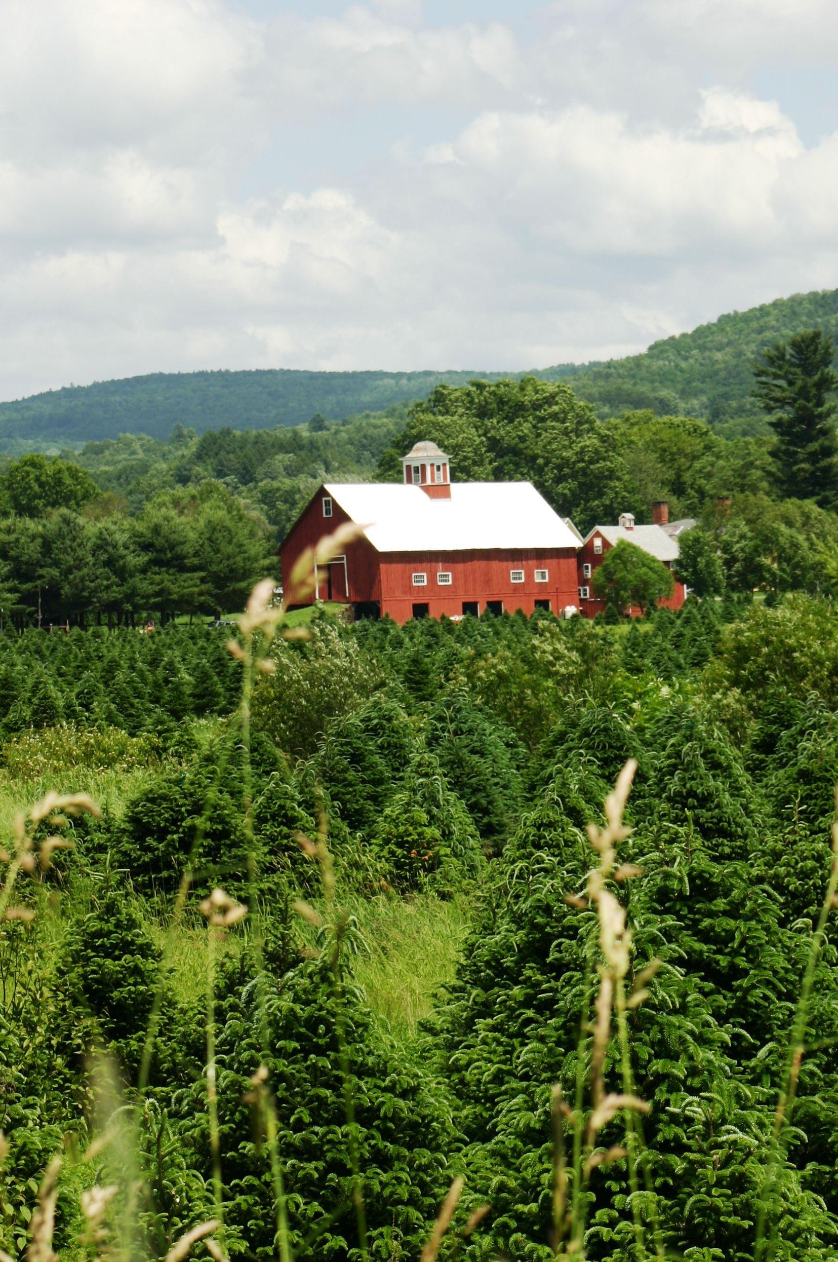 Vermont Christmas Tree Farm Tree Farms Christmas Tree Lots Old Barns