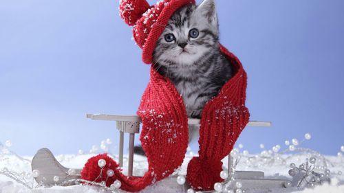 Gatito friolero :)