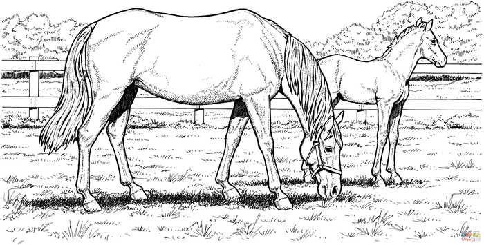 filly pferde ausmalbilder  suchen sie malvorlagen für