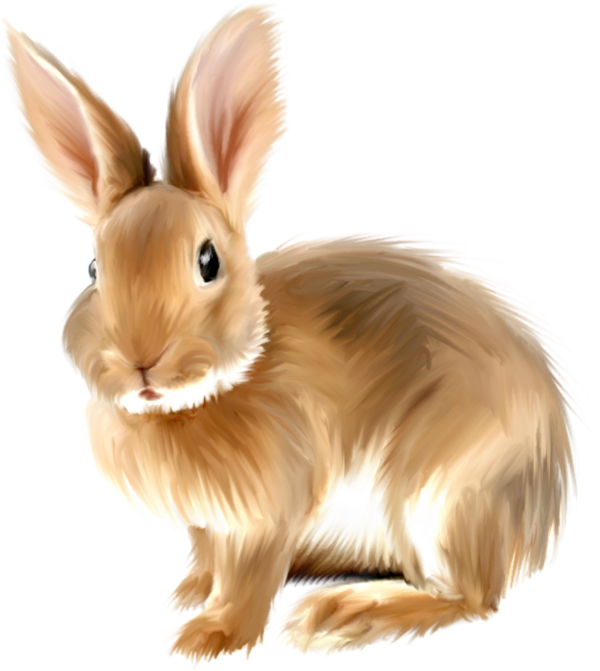 Cute Painted Bunny PNG Picture Clipart | gif zajac | Pinterest ...