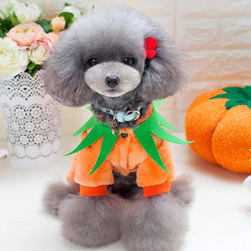 Halloween Dog Pumpkin Costume Dog pumpkin, Dog halloween