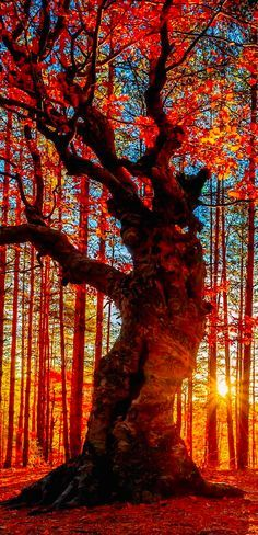 Autumn forest near the Belintash Rock landmark in the Rhodope Mountains of Bulgaria • Evgeni Dinev Photography