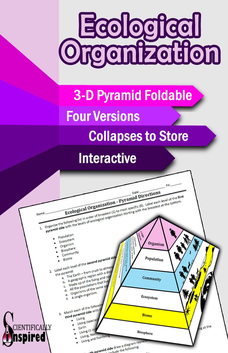 A Four Sided Ecological Organization Pyramid Foldable That Is Easy To Store In Notebooks Includes Four Versions So Biology Lessons Ecology Chemistry Lessons