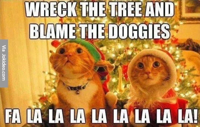 Image result for cat christmas memes