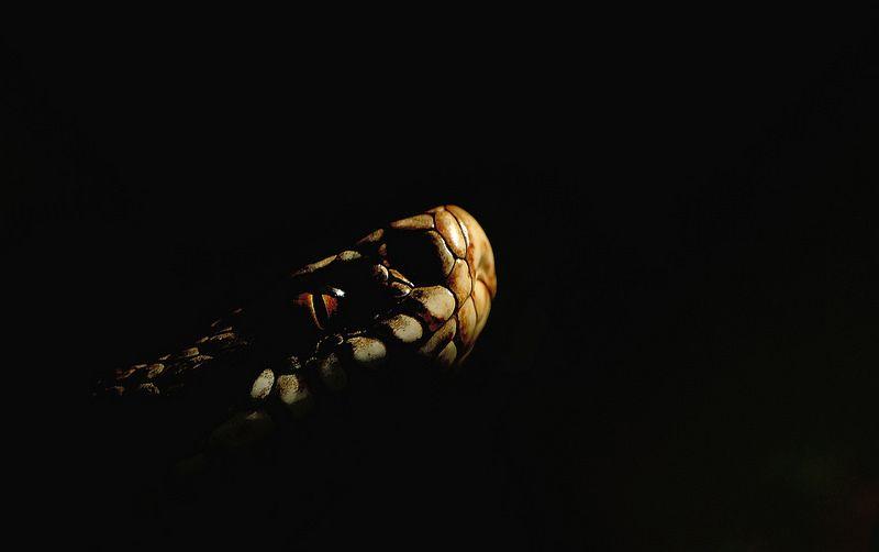 Adder ~ beautifully done shot  #photography #wildlife #snake #myt