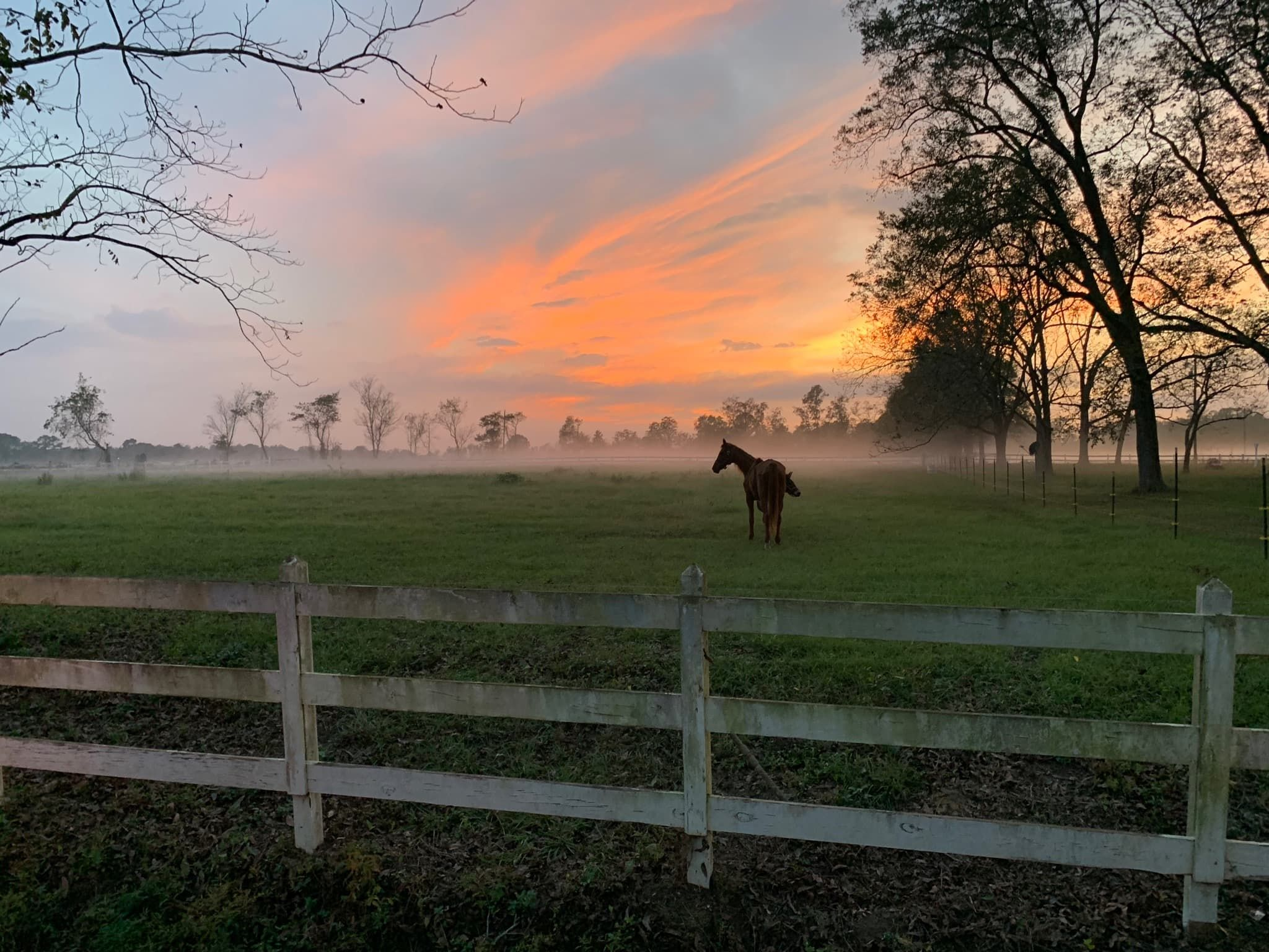 Local opportunities to make friends with a horse liberty