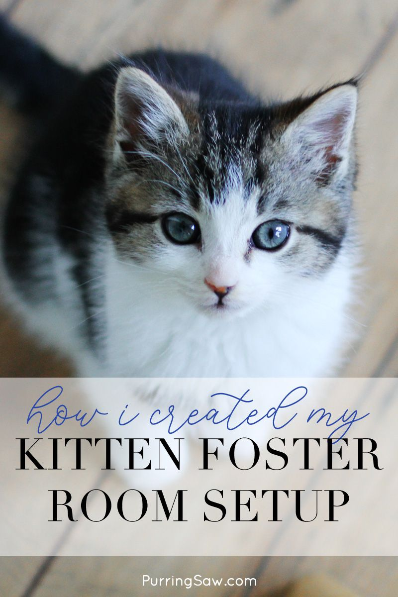 Pin This And Click Through To Read Your Kitten Foster Room Setup Doesn T Have To Elaborate Or Large Here Is The Process I Foster Kittens Kitten Foster Cat