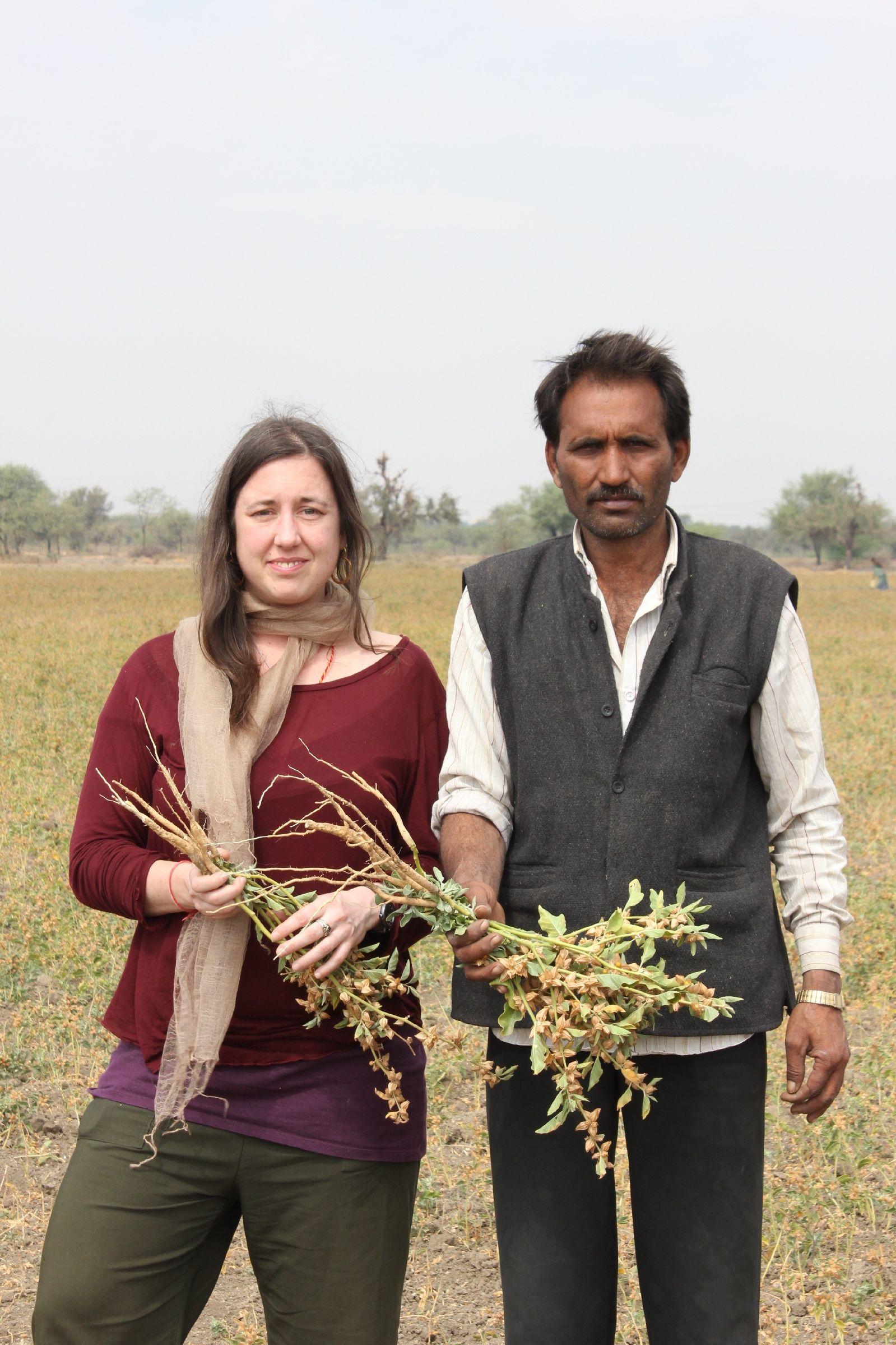 Cultivating Organic Ashwagandha in India Growing herbs