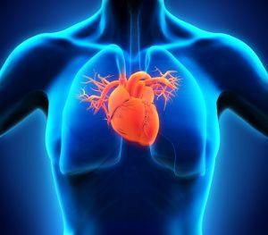 Ein Zinkmangel erhöht das Risiko einer Herzinsuffizienz in..