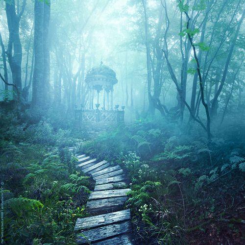 Imagem de forest, nature, and wonderland