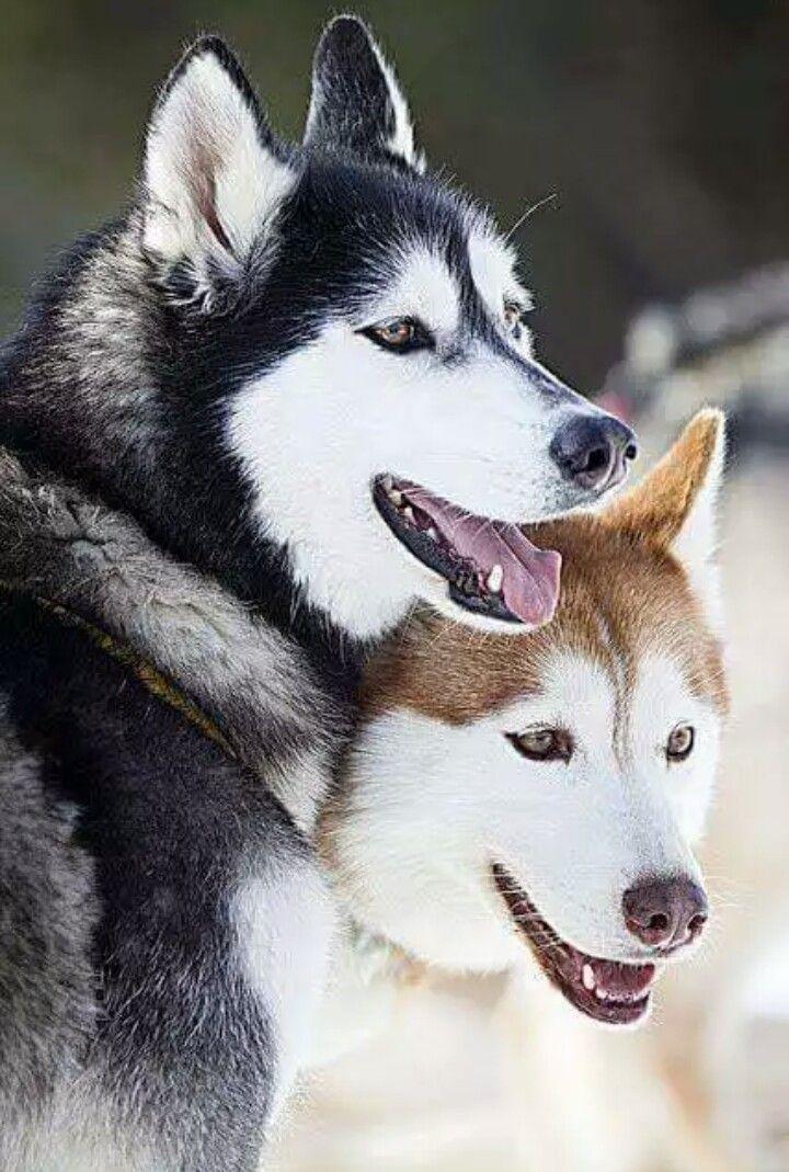 Beauty Beautiful Dogs