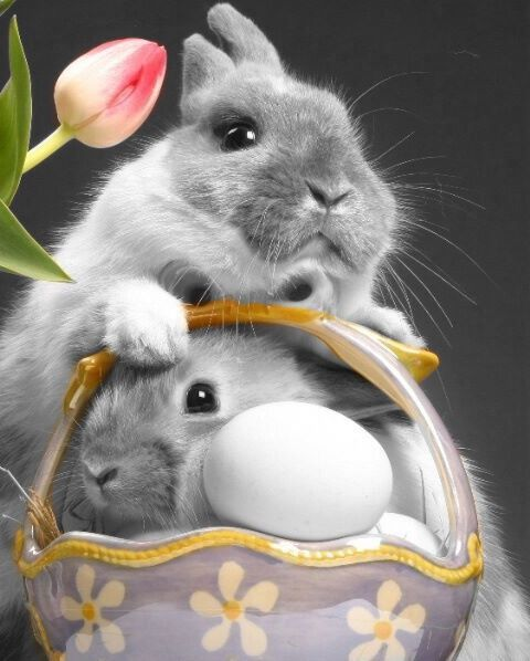 splash of color photography / Easter Bunny X 2