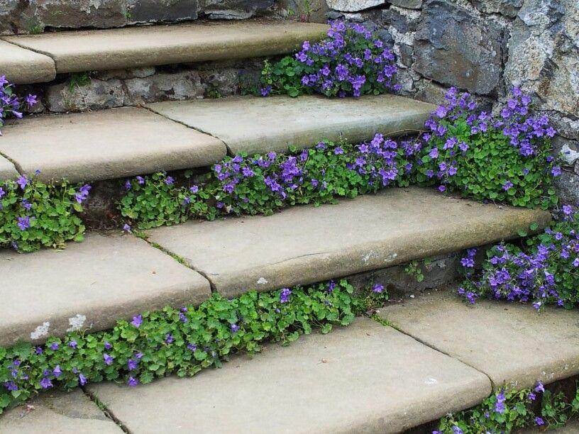 Pritty steps