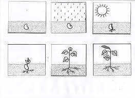 Resultado De Imagen Para Actividades Para Ensenar Las Plantas En