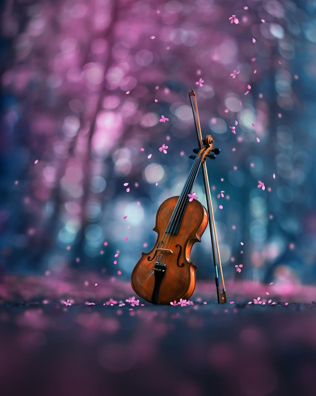 """Ashraful Arefin on Instagram: """"Listen, can you hear it... Springs's sweet cantata.. How's Spring in your part of the world? . . . . . . . . . . #ashrafularefin #105mm…"""""""