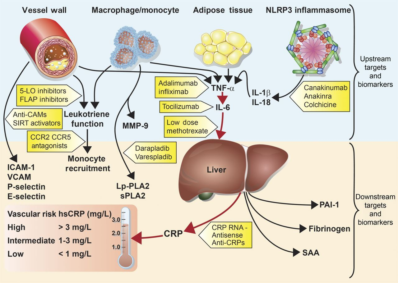 Lipoprotein Metabolism And Tocilizumab