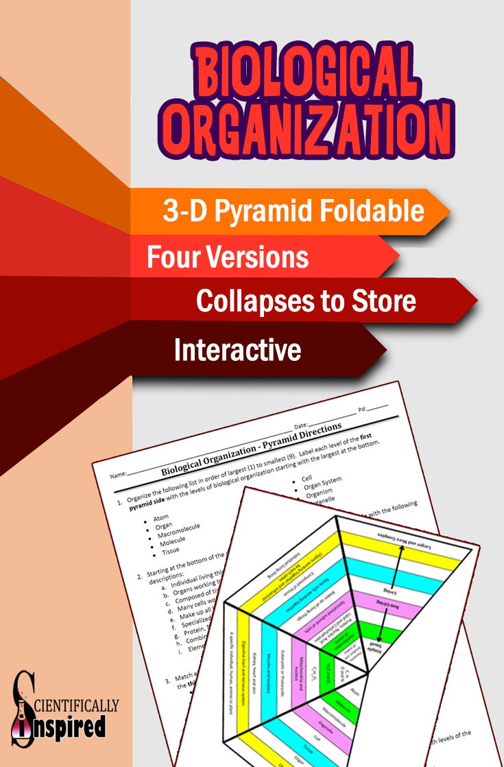 Biological Organization Pyramid 3 D Foldable 4 Versions Collapses To Store Life Science Middle School Biology Lessons Chemistry Lessons