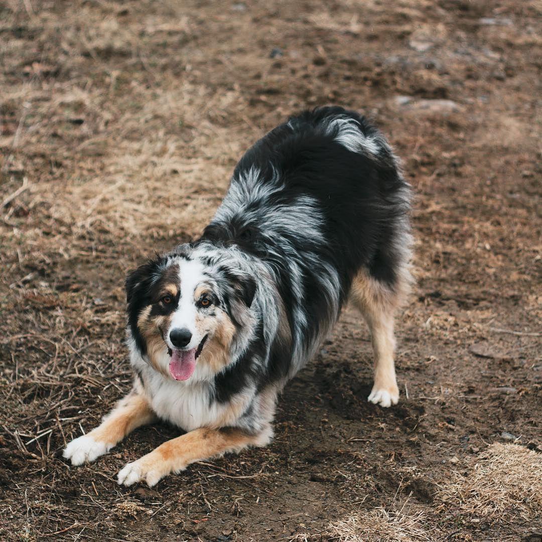 Pin On Aussie Dog House