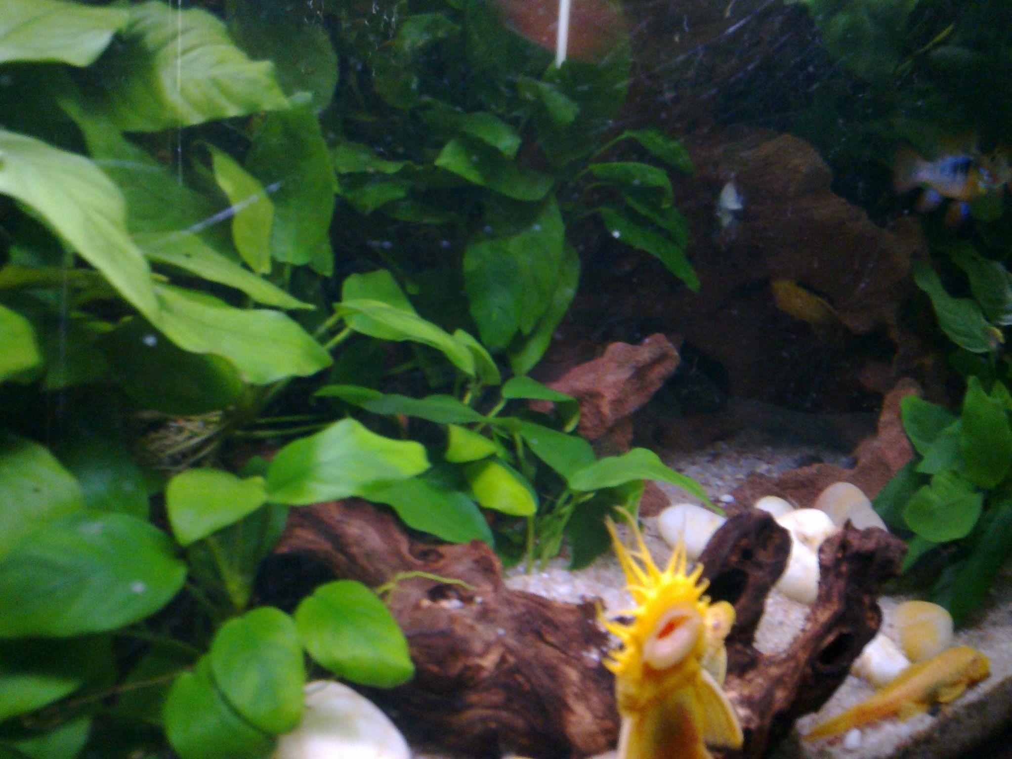 82f02fa84d677e4a49ab24f3f7852889 Frais De Aquarium Tropical Schème
