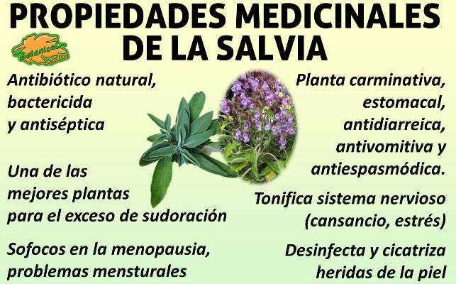 Propiedades medicinales curativas y beneficios de la for Planta decorativa con propiedades medicinales