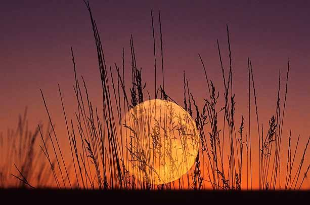 Harvest Moon Myths of the Past, Present and Future | HISTORIES OF THINGS TO COME