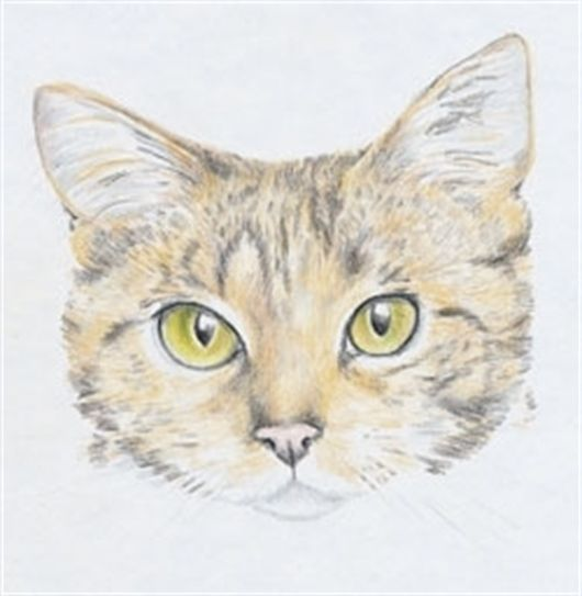How To Draw A Cat Using Caran D Ache Supracolor Soft Coloured