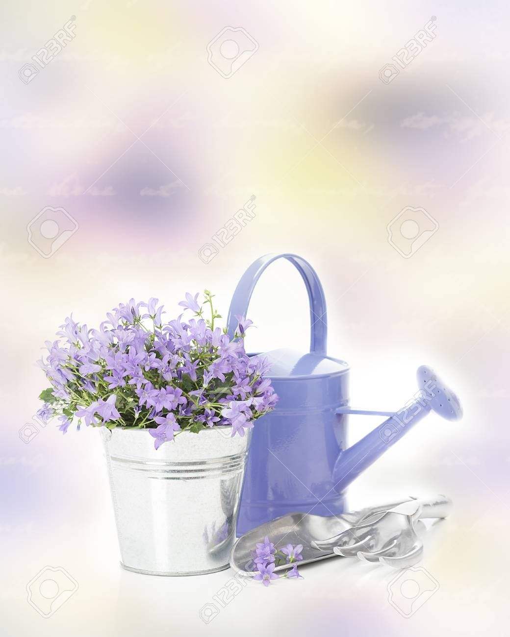 Campanula Flowers In Pot With Garden Tools Campanula Flowers Garden Plant Pots Garden Tools