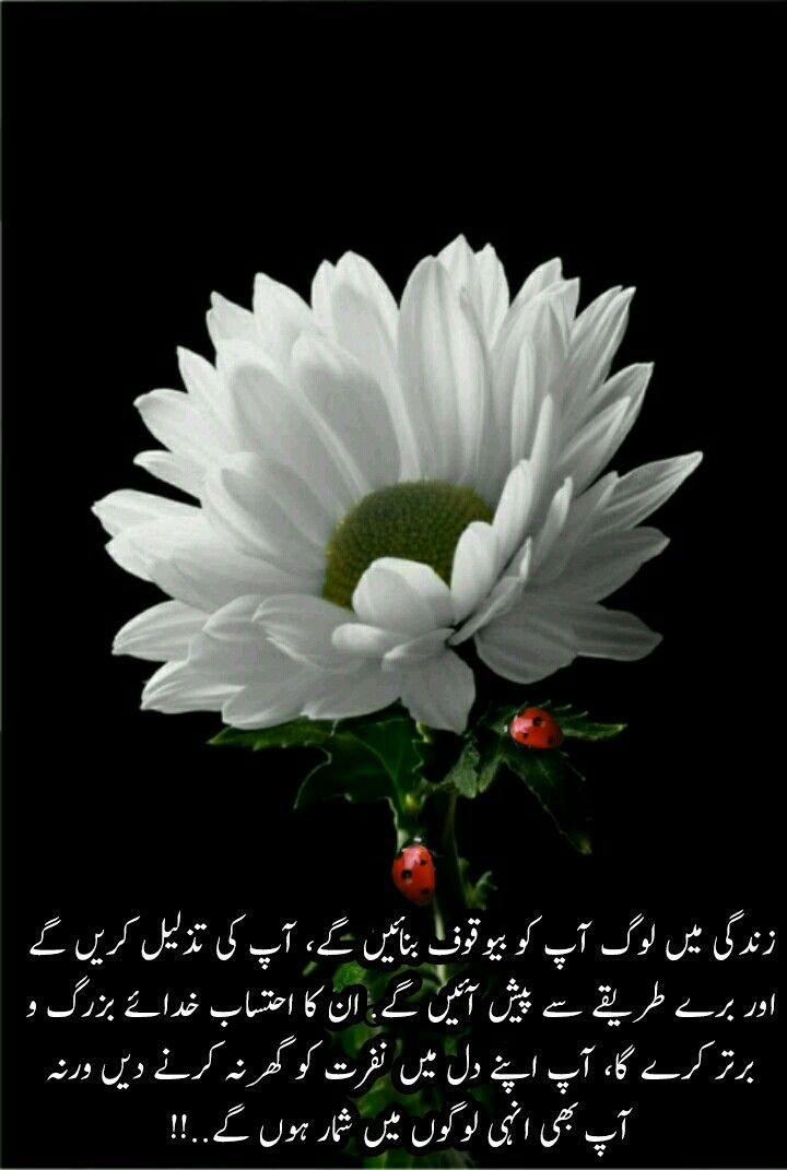 Pin By Shehnaz Malik On Sweet Urdu Beautiful Flower Quotes Flower Quotes Flower Images