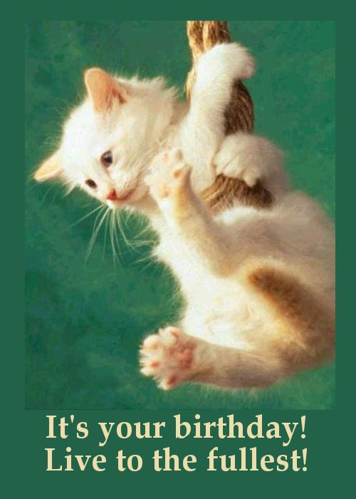Free Funny Cat Birthday Cards Infocards