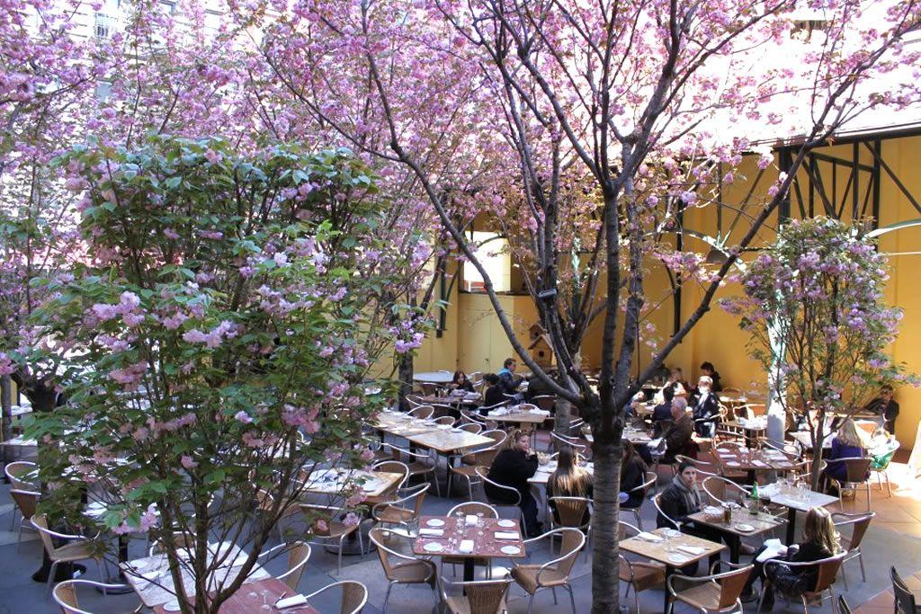 restaurant outdoor garden design of barolo ristorante new york