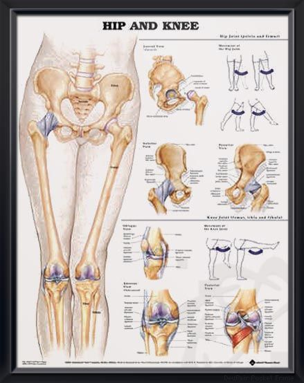 Athletic Injuries Of The Knee Chart 20x26 Anatomy Drawings
