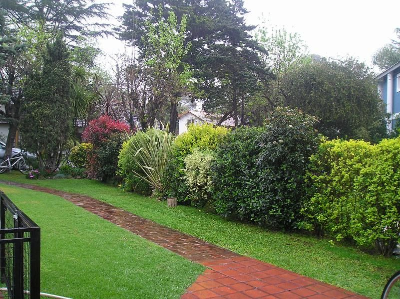 Arbustos peque os para jardin buscar con google for Arbustos ornamentales para jardin