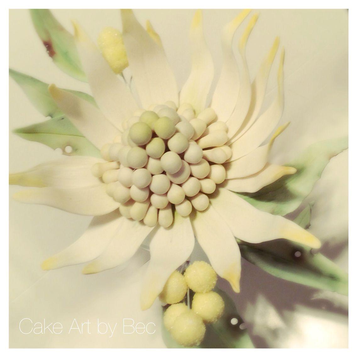 White Waratah sugar flower. By Cake Art by Bec