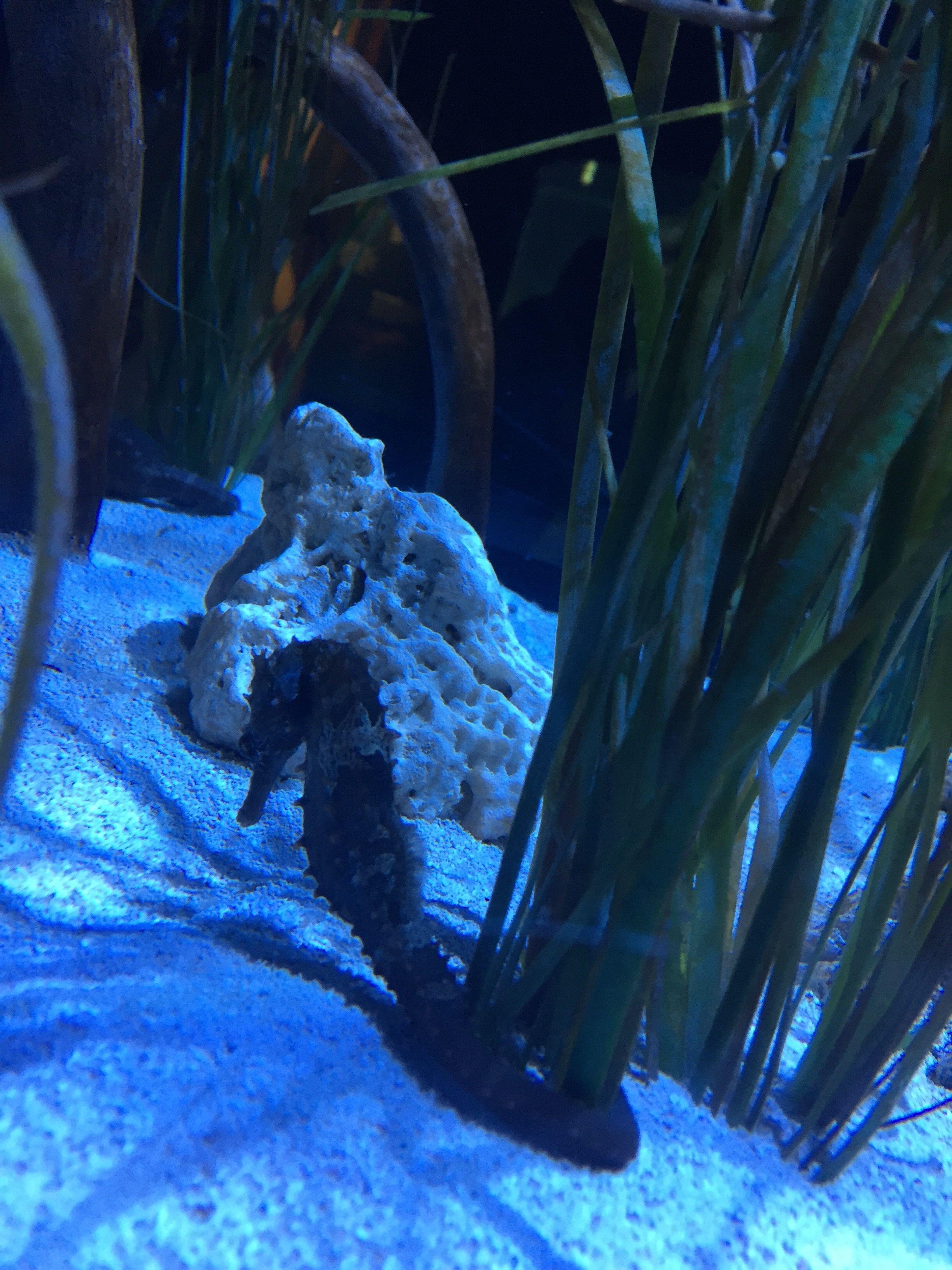 fort fisher aquarium nc beaches obx ab cb pinterest kure