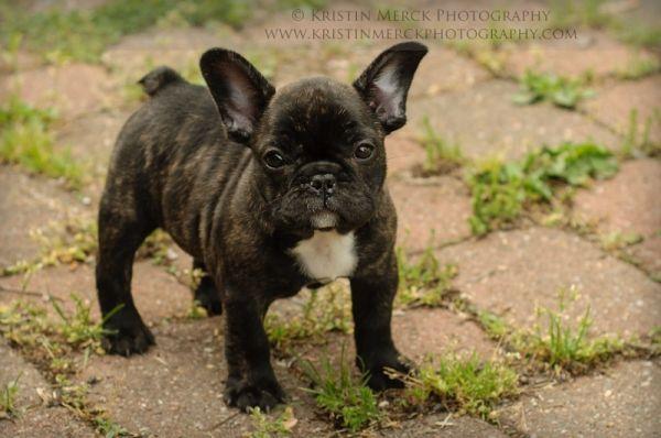 Cutest Dog Ever Kristin Merck Photography Great Pet Photo