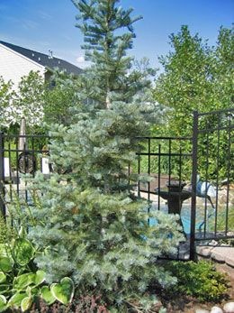 Large Tree Landscaping Ideas Front Yard